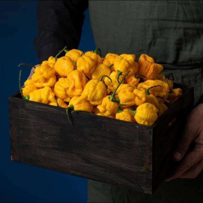 7 Pot Brain Strain yellow свіжий перець