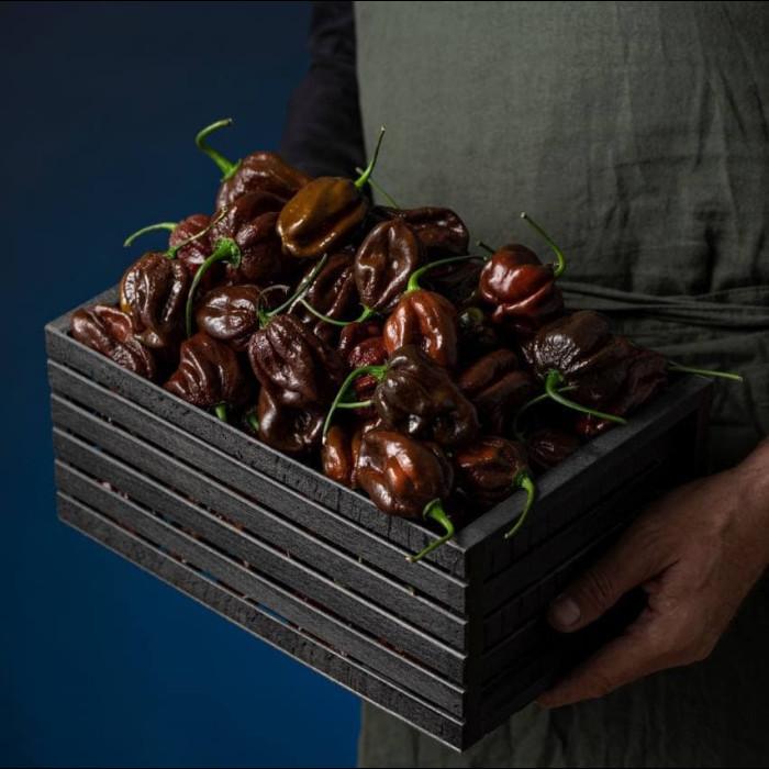 Habanero Chocolate свіжий перець
