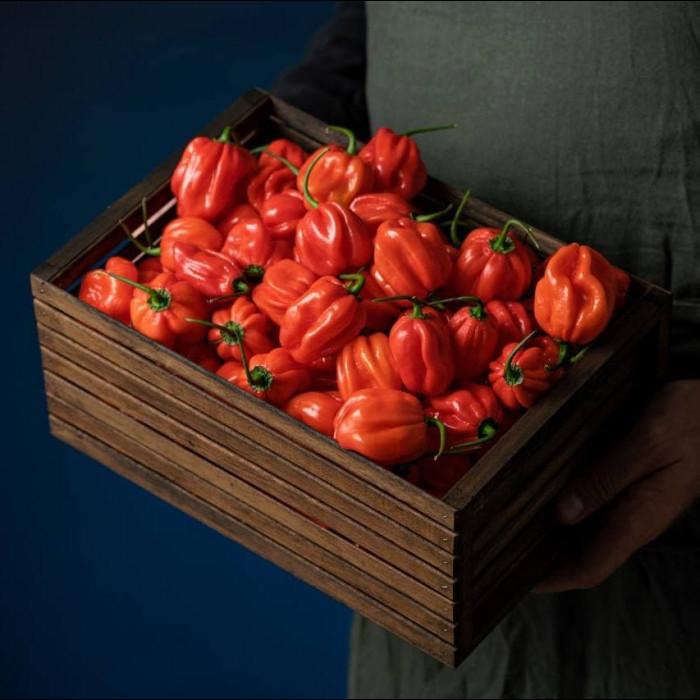 Habanero Red свіжий перець