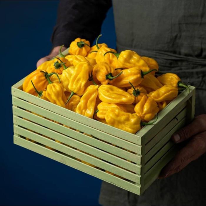 Habanero Yellow свіжий перець